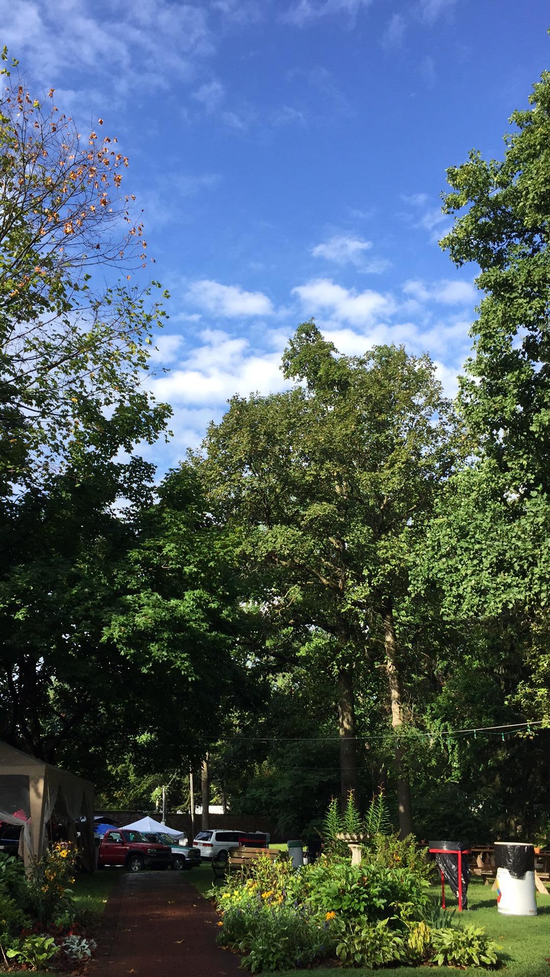 blue sky beautiful day